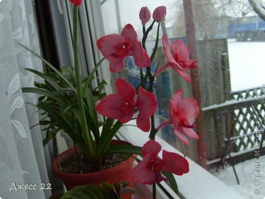 Веточка орхидеи фото 3