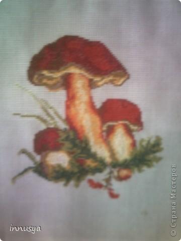 мои грибочки фото 1