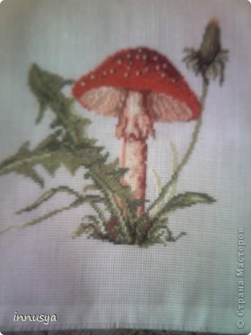 мои грибочки фото 2