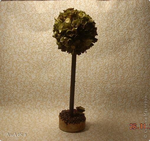 Эти три деревца мои самые любимые! Давайте их рассмотрим... фото 11
