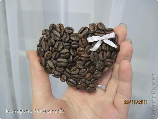 Вот у всех кофейные деревья разные.. а у меня... гигант!!! вот ведь какая, сразу режу а потом меряю((( фото 5