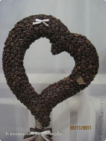 Вот у всех кофейные деревья разные.. а у меня... гигант!!! вот ведь какая, сразу режу а потом меряю((( фото 3