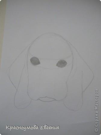 Здравствуйте! Я собираюсь показать вам, как я рисую бигля! Берите карандаш, бумагу и резинку! Приступим... фото 12