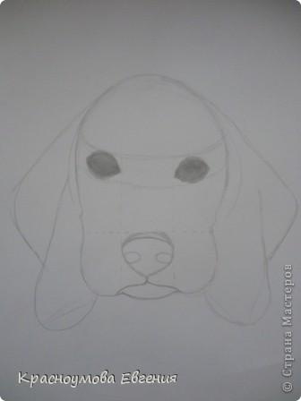 Здравствуйте! Я собираюсь показать вам, как я рисую бигля! Берите карандаш, бумагу и резинку! Приступим... фото 14