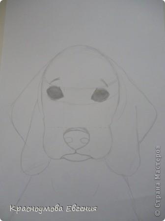 Здравствуйте! Я собираюсь показать вам, как я рисую бигля! Берите карандаш, бумагу и резинку! Приступим... фото 15