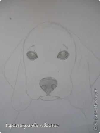 Здравствуйте! Я собираюсь показать вам, как я рисую бигля! Берите карандаш, бумагу и резинку! Приступим... фото 20