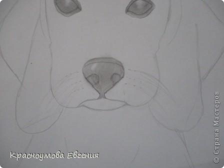 Здравствуйте! Я собираюсь показать вам, как я рисую бигля! Берите карандаш, бумагу и резинку! Приступим... фото 22
