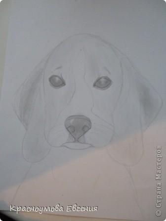 Здравствуйте! Я собираюсь показать вам, как я рисую бигля! Берите карандаш, бумагу и резинку! Приступим... фото 24