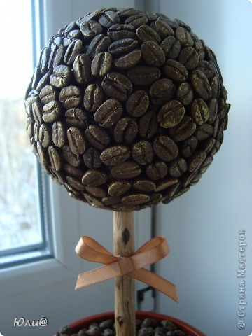 Кофейное дерево фото 2