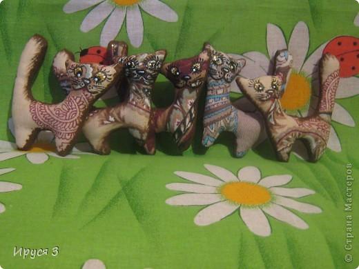 Кошачье семейство и собачка такса фото 6