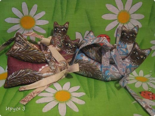 Кошачье семейство и собачка такса фото 7