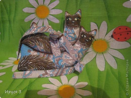Кошачье семейство и собачка такса фото 3