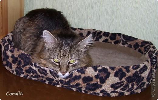 Кото-кровать фото 2