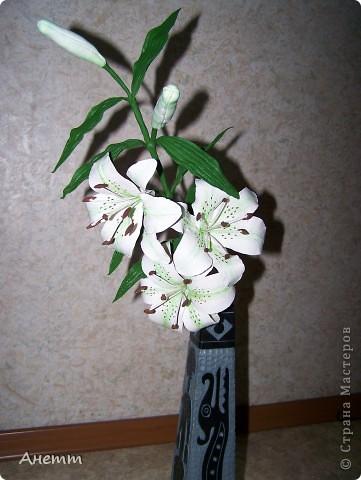 Здравствуйте мастерицы.Слепила один из самых моих любимых цветов.Большое спасибо Фиттонии за мастер класс:https://stranamasterov.ru/node/139635 фото 6