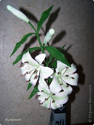 Здравствуйте мастерицы.Слепила один из самых моих любимых цветов.Большое спасибо Фиттонии за мастер класс:https://stranamasterov.ru/node/139635 фото 5