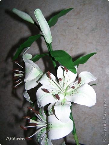 Здравствуйте мастерицы.Слепила один из самых моих любимых цветов.Большое спасибо Фиттонии за мастер класс:https://stranamasterov.ru/node/139635 фото 7