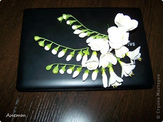Здравствуйте мастерицы.Слепила один из самых моих любимых цветов.Большое спасибо Фиттонии за мастер класс:https://stranamasterov.ru/node/139635 фото 4