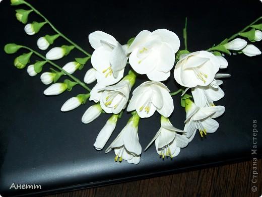 Здравствуйте мастерицы.Слепила один из самых моих любимых цветов.Большое спасибо Фиттонии за мастер класс:https://stranamasterov.ru/node/139635 фото 1
