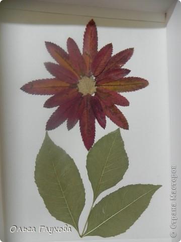 колобок - румяный бок фото 2