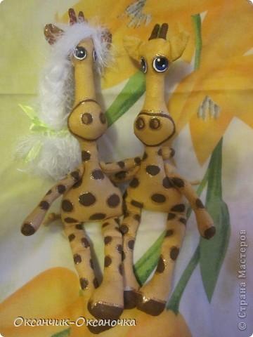 Жирафики  фото 2