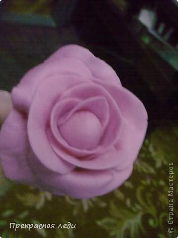 Роза крупным планом. фото 3
