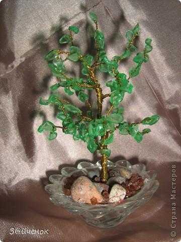 Вот такое дереввце выросло из простой бутылки, Оно совсем маленькое около 15 см. фото 1