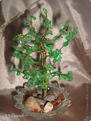 Вот такое дереввце выросло из простой бутылки, Оно совсем маленькое около 15 см. фото 2