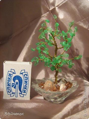 Вот такое дереввце выросло из простой бутылки, Оно совсем маленькое около 15 см. фото 5