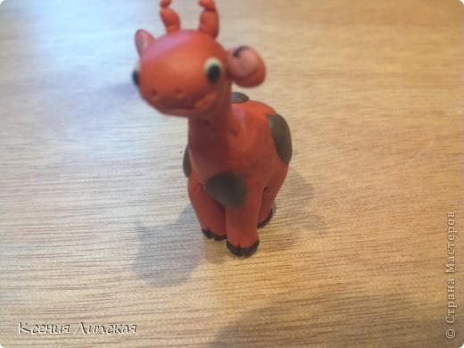 Жирафик фото 8