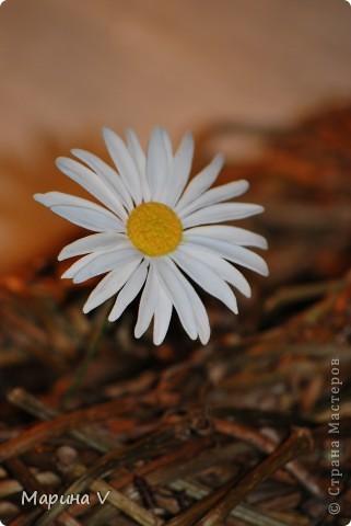 """Розы сделаны из само варенного холодного фарфора, ромашка -- из глины """"хаирти софт""""  фото 4"""
