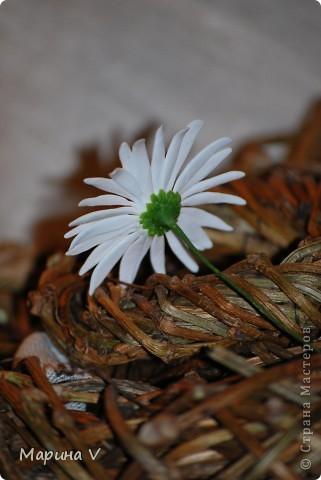 """Розы сделаны из само варенного холодного фарфора, ромашка -- из глины """"хаирти софт""""  фото 6"""