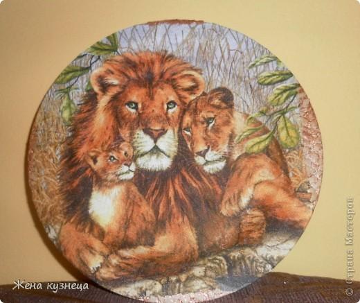 Любимые львы фото 1