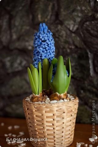 Весна на подоконнике! фото 3