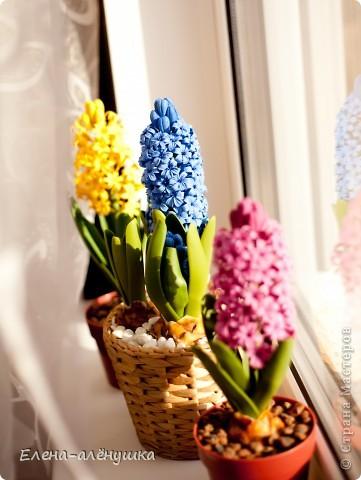 Весна на подоконнике! фото 1