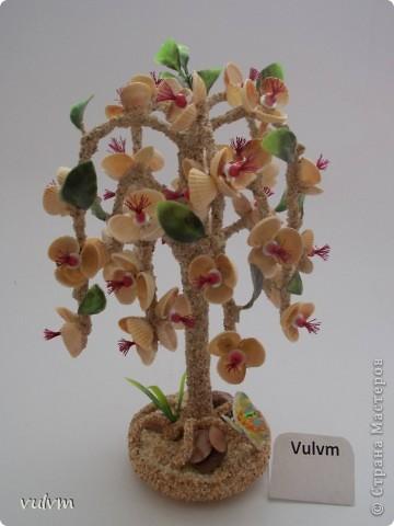 разные новые деревья из серии пальмы фото 1