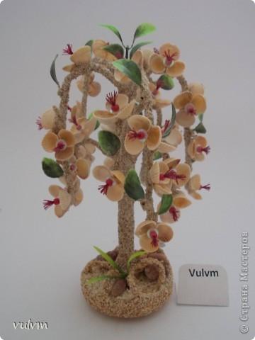 разные новые деревья из серии пальмы фото 4