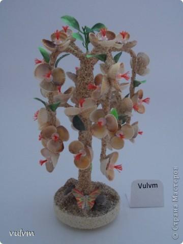 разные новые деревья из серии пальмы фото 6