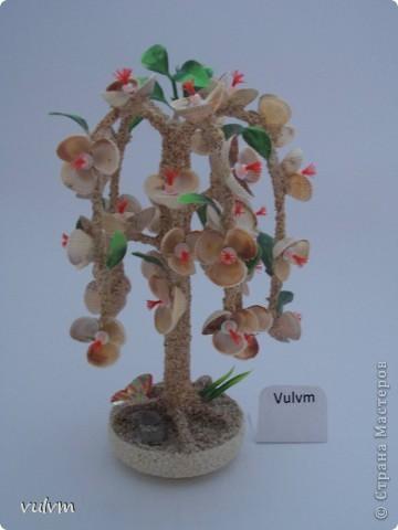 разные новые деревья из серии пальмы фото 7