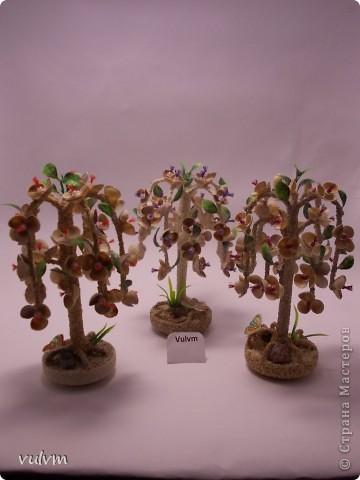 разные новые деревья из серии пальмы фото 2