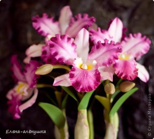 """Орхидея """"Каттлея"""" фото 2"""