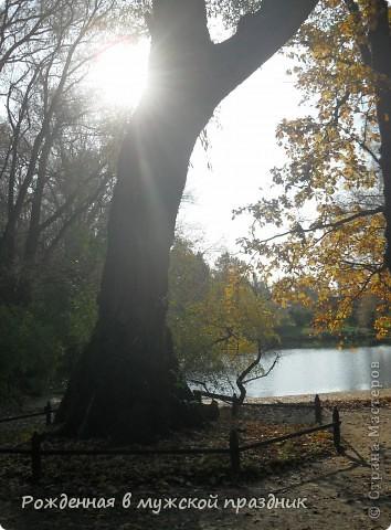 Очень люблю осеннюю природу. Когда вокруг все в желто-оранжево-красной гамме. И солнце пробивается сквозь не опавшие еще листья. Ранняя осень. фото 1