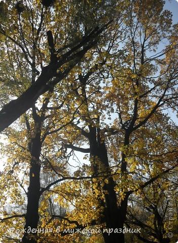 Очень люблю осеннюю природу. Когда вокруг все в желто-оранжево-красной гамме. И солнце пробивается сквозь не опавшие еще листья. Ранняя осень. фото 2