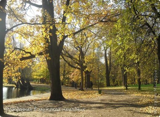 Очень люблю осеннюю природу. Когда вокруг все в желто-оранжево-красной гамме. И солнце пробивается сквозь не опавшие еще листья. Ранняя осень. фото 5