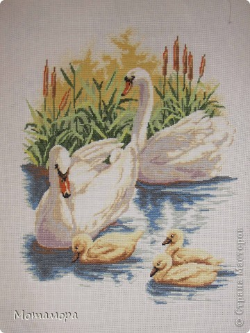 Лебединое семейство. фото 2