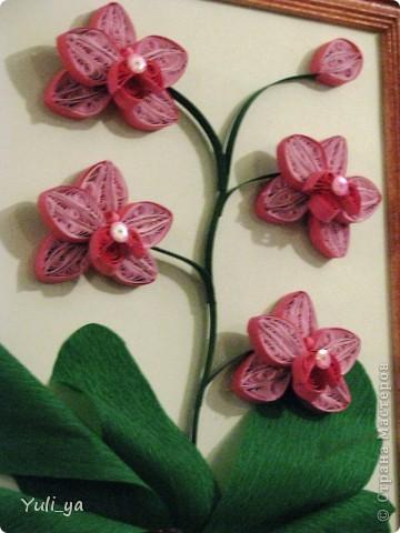...орхідеї одні із моїх улюблених  квітів... ...така картинка получилась))... фото 2