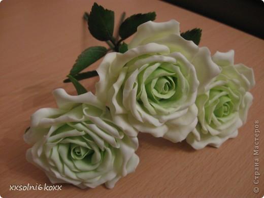 Просто розы фото 1