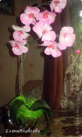 Моя первая орхидея! Хочу поделится с Вами как я ее творила!!!