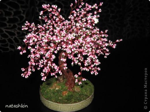 Цветущая сакура | Страна