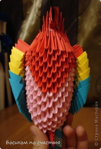 Поделка изделие Оригами модульное Попугайчик Ара Бумага фото 2.