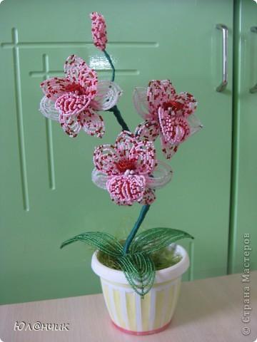 орхидею Бисер фото 1.